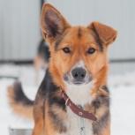 Пёс рэм в добрые руки, Челябинск