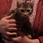 Кошки и собаки, Челябинск
