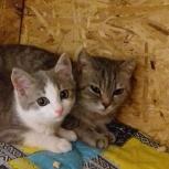 В добрые руки котята, Челябинск