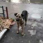 Щенок подросток в добрые руки., Челябинск