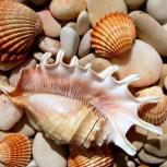 морские раковины, Челябинск