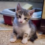Котёнок 2шт, Челябинск