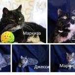 Разные котики ищут мам и пап, Челябинск