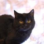 Черненькая девочка кошка, Челябинск