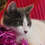 Котёнок в добрые руки, серо-белая девочка Люся, Челябинск