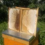 Мёд маточное молочко  перга прополис  воск, Челябинск