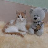 Котёнок в добрые руки., Челябинск
