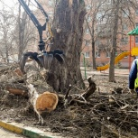 Спил деревьев., Челябинск