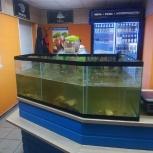 Магазин рыбной гастрономии, Челябинск