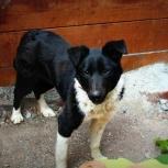 Собака дези в добрые руки, Челябинск