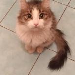 Кошка Малышка в поисках дома, Челябинск