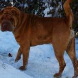 Пёс Буч в добрые руки, Челябинск