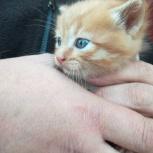 Котенок в добрые руки, Челябинск