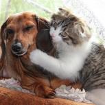 Домашняя гостиница для собак и кошек, Челябинск