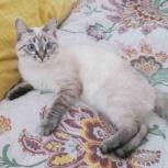 Отдаю молодую кошечку, Челябинск