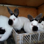 Кролики, Челябинск