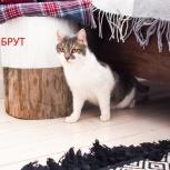 Брут - крупный молодой котик, Челябинск