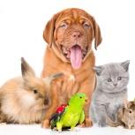 Babysitter for pets (присмотр за домашними животными), Челябинск