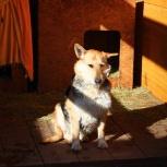 Собака жуля в добрые руки, Челябинск