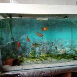 Продам аквариум на 120+, Челябинск