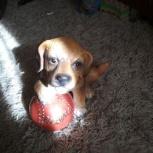 Фигурка собаки с мячом, Челябинск