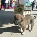 отдам в хорошую семью  щенка, Челябинск