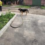 Найдена собака, Челябинск