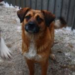 собака Линда в добрые руки, Челябинск