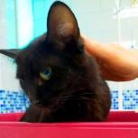 Кошка в добрые руки, Челябинск