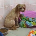 Собака Боня в добрые руки, Челябинск