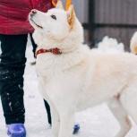 Пёс в добрые руки, Челябинск