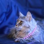 Алиса кошка, Челябинск