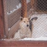 Собака Вита в добрые руки, Челябинск