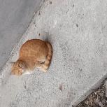 Отдам даром котика, Челябинск