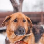 Пес бруно в добрые руки, Челябинск