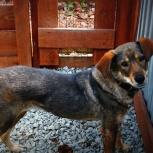 Собака фиби в добрые руки, Челябинск