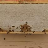 Мёд в сотах, Челябинск