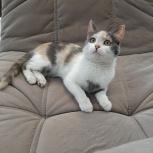 Котёнок в добрые руки, Челябинск