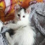 Котёнок ., Челябинск