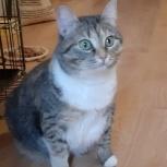 Кошка Лапонька  добрым людям, Челябинск
