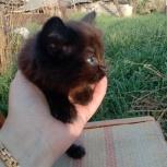 Котята даром, Челябинск
