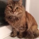 Кошечке малышке очень нужна семья, Челябинск