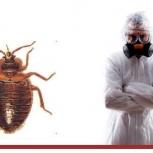 Уничтожение клопов,тараканов, муравьёв, клещей Челябинск и Область, Челябинск