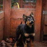 Собака малышка в добрые руки, Челябинск