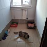 Передержка гостиница для кошек и котов, Челябинск