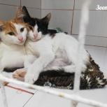 Котята в добрые руки., Челябинск