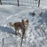 Собака в добрые руки, Челябинск