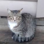 Стирилизованная  кошечка в частный дом и котик, Челябинск