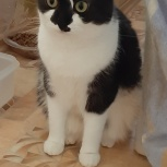 Кошка прелестная девочка, Челябинск