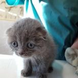 Ветеринарный врач на дом, Челябинск